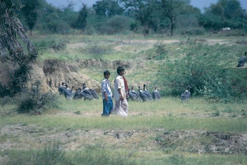 VillagersCloseVultures-Asad-Rahmani