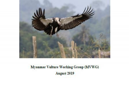 Vulture conservation action plan page header