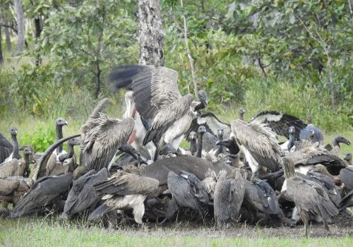 Vulture restaurant (5)